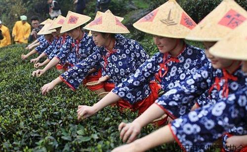 《专家讲坛》NO-3:如何打造衡阳100亿茶产业