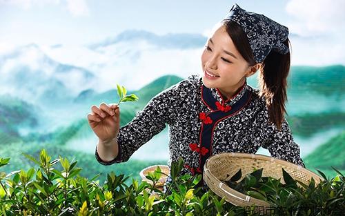 《专家讲坛》NO-5:有关各级各地茶叶产业品牌化发展情况