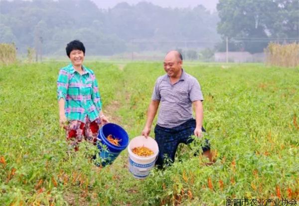 2019上半年 衡阳市实现农林牧渔业总产值248.59亿元
